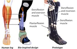 Soft, Robotic Device May Have Implications in Assisting Patients with Ankle-Foot Disorders
