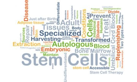 Stem Cells Successfully Regenerate Damaged Spinal Cord Tissue, Per Study