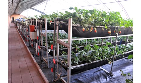 Container Farm Model Designed for Persons in Wheelchairs
