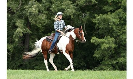 A Horse as a Therapeutic Tool? Possible Positive Impact from Therapeutic Riding and Hippotherapy
