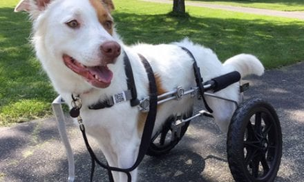 Joey's P.A.W. Provides Mobility Aids and Forever Homes for Special Needs Dogs