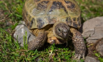 Research in Turtles Adds Insights Into Movement Generation and Maintenance