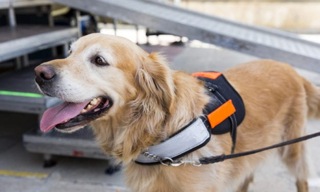 Occupational Therapist Finds Her Passion in Training Man's Best Friend to Provide Assistance