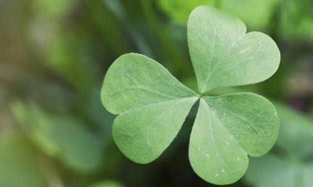 MDA Rolls Out Its 39th Annual Shamrocks Campaign