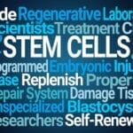 Stem Cells Help Repair Injured Spinal Cord, Scientists Report