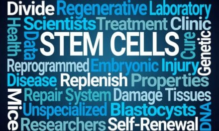 Stem Cells Help Repair Injured Spinal Cord, Scientists Report